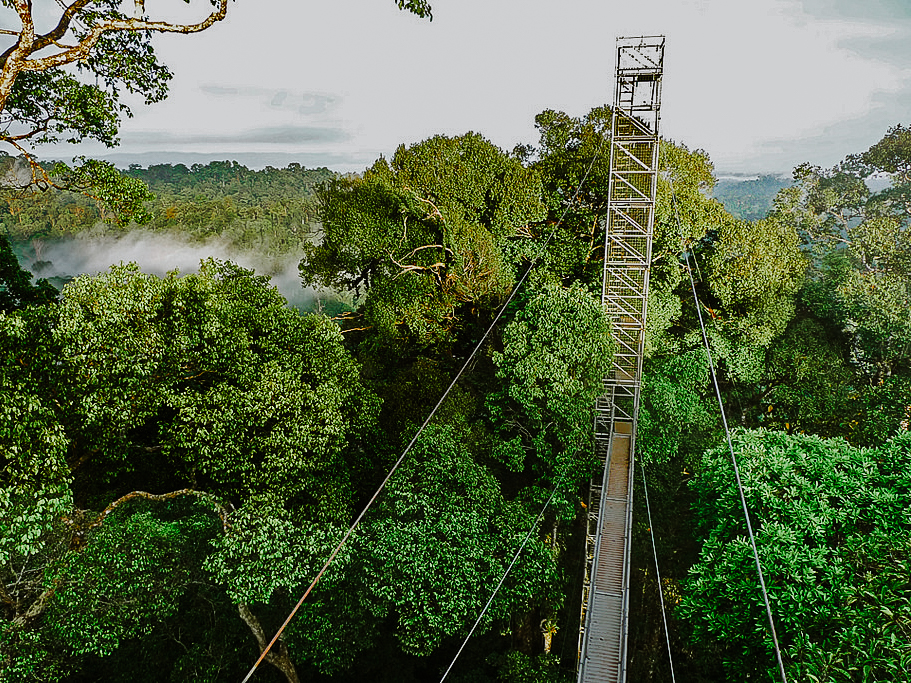 Sumbiling Eco Village & Ulu Temburong National Park Canopy Walk (2D1N)